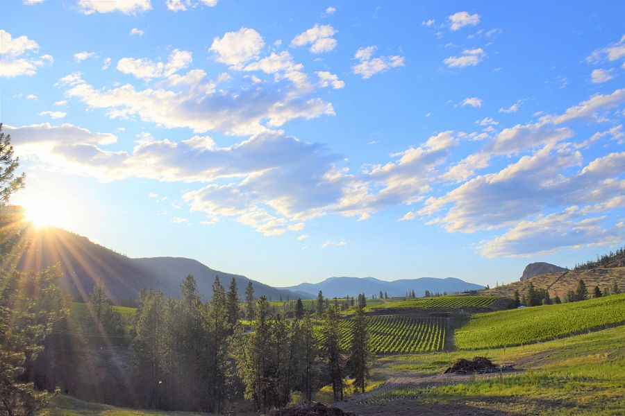 Okanagan Falls  Wine Tour